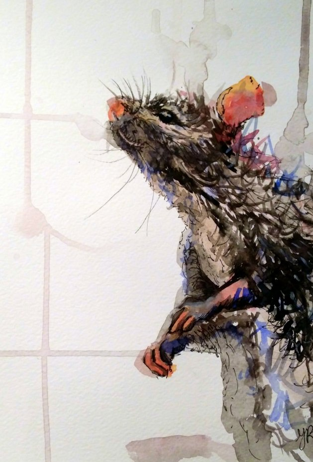 Inquisitive Ratty. Original art by Yvette Rawson